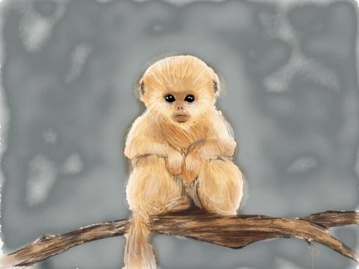final Monkey